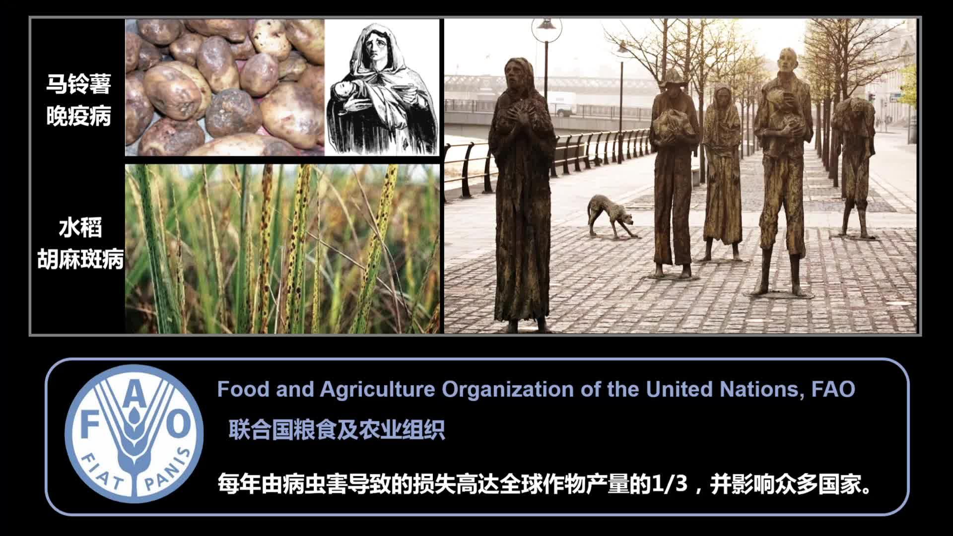 CC讲坛——郭惠珊:跨界打靶,植物与真菌背后的无间道