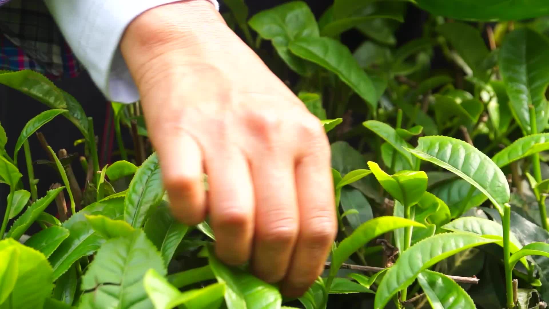 茶山·绣女·朗寨情