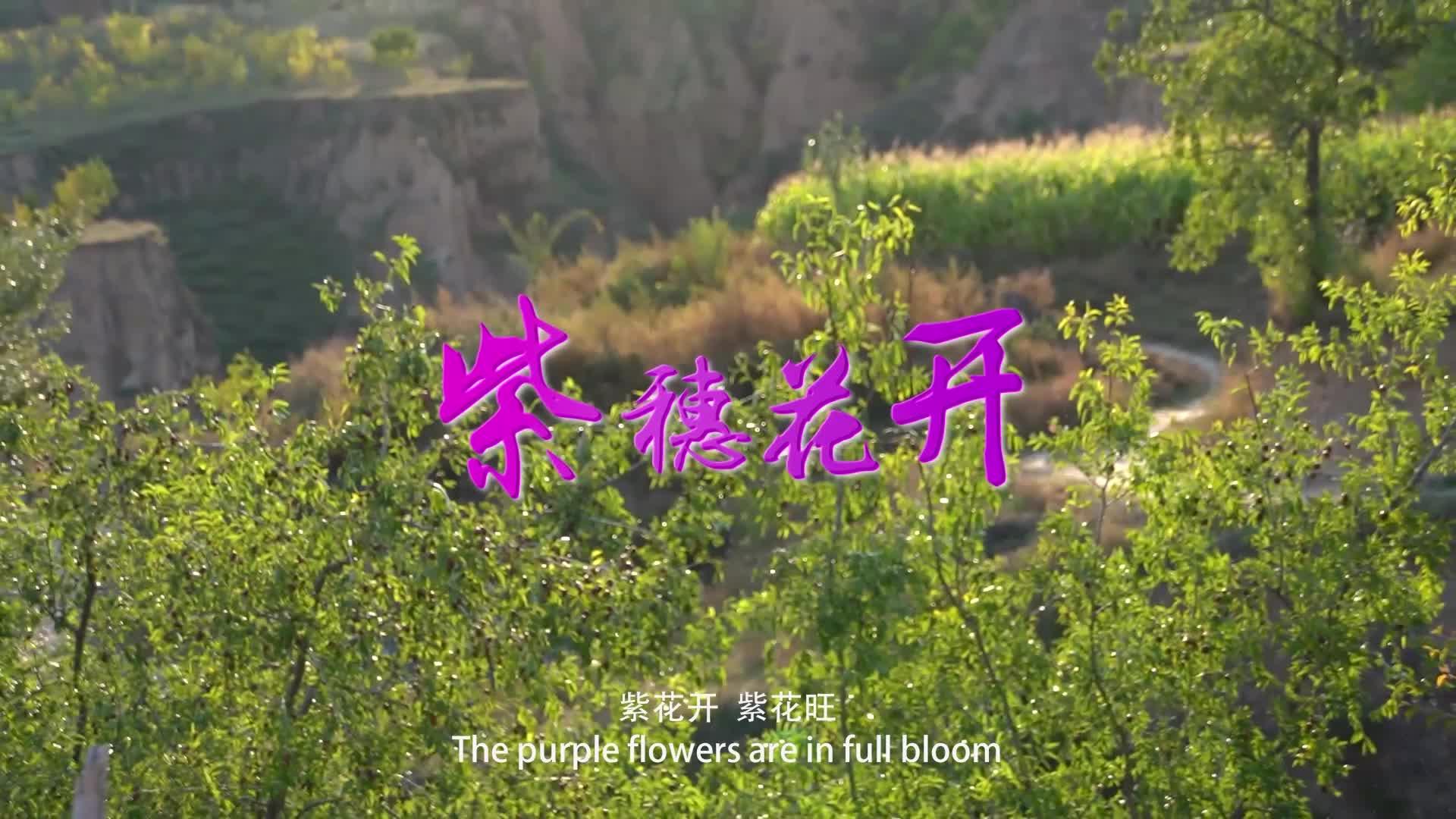 微电影:《紫穗花开》