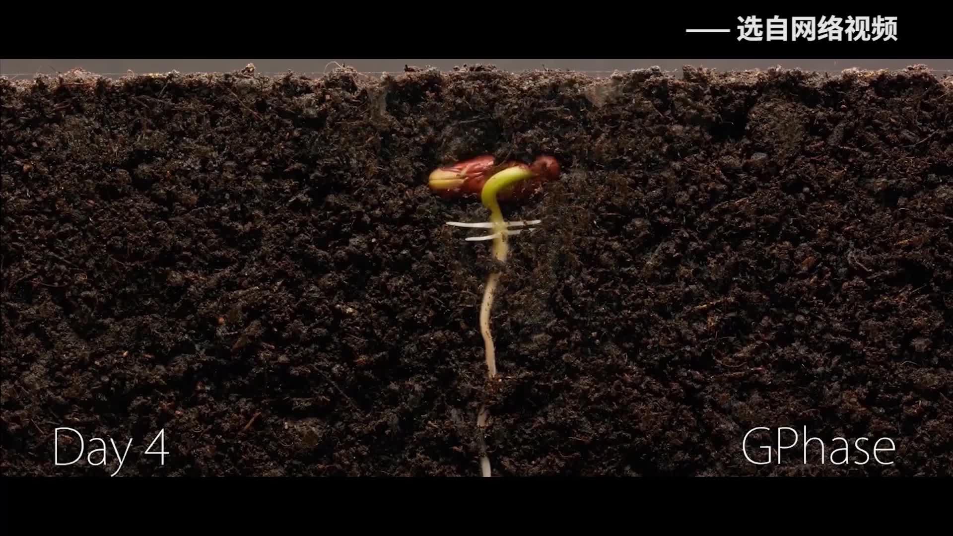 《科学嘻游记》 第96集 豆科植物的生命周期是怎样的