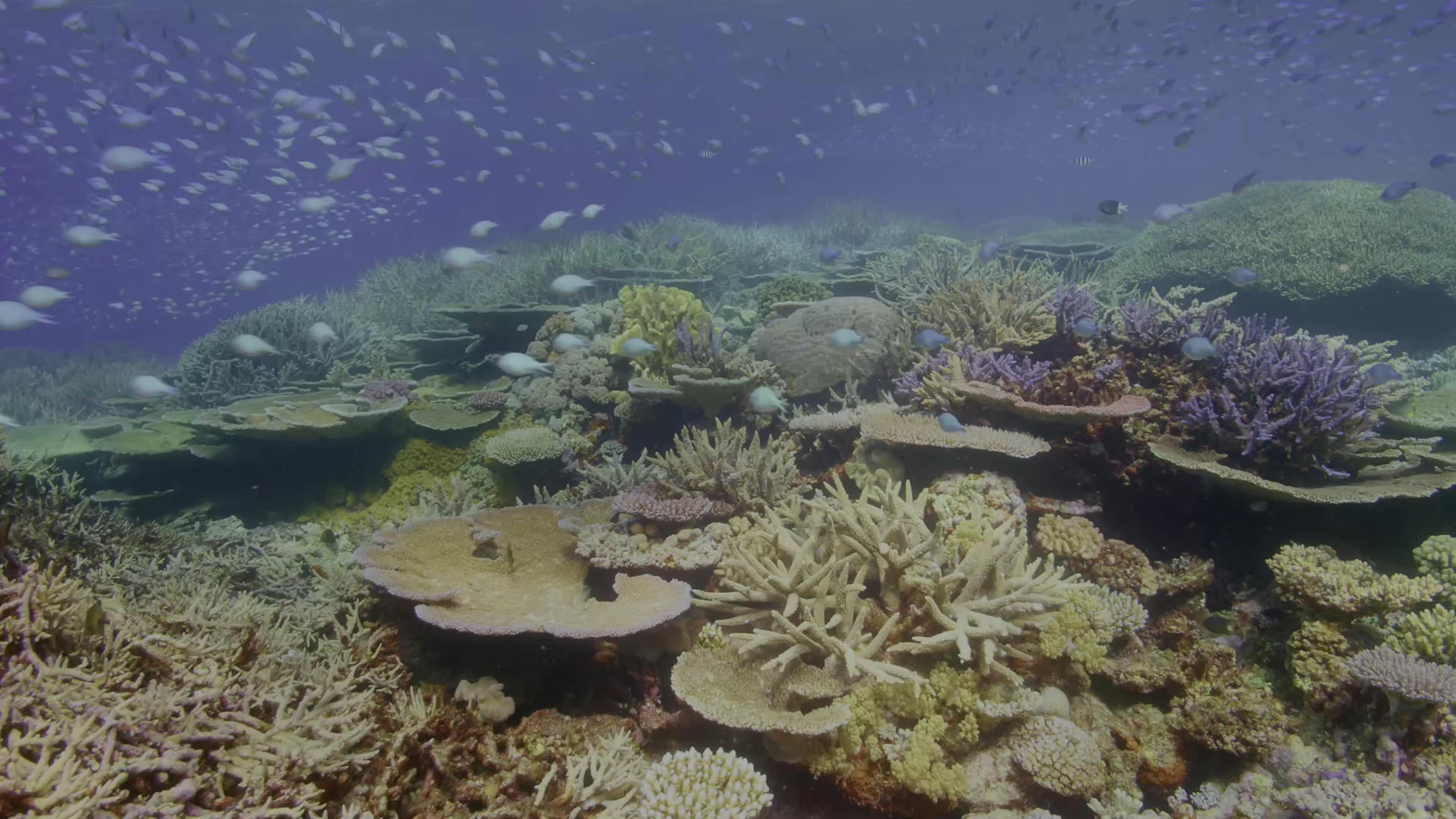 海底世界1