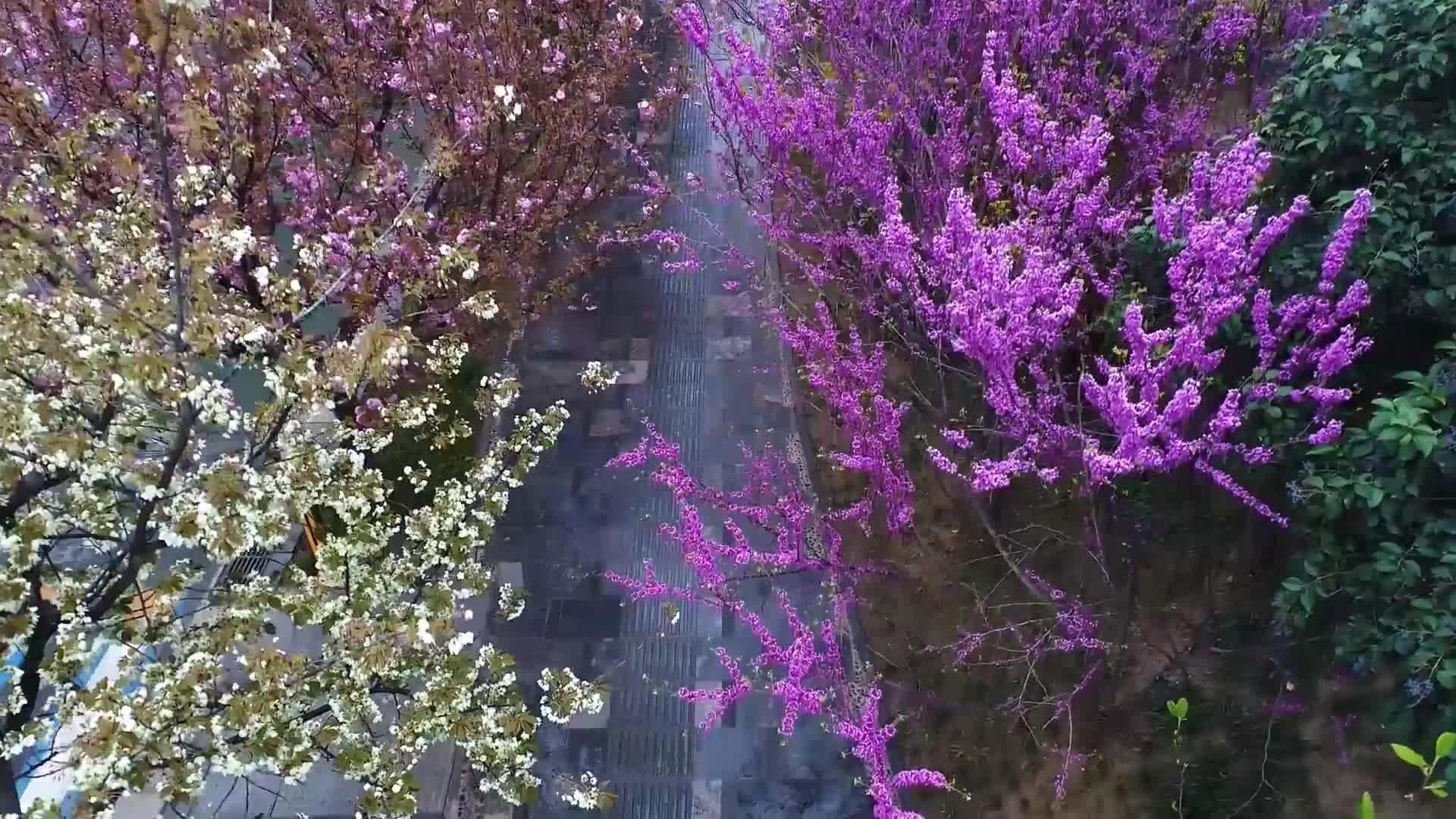 俯瞰西安·春 街景春色