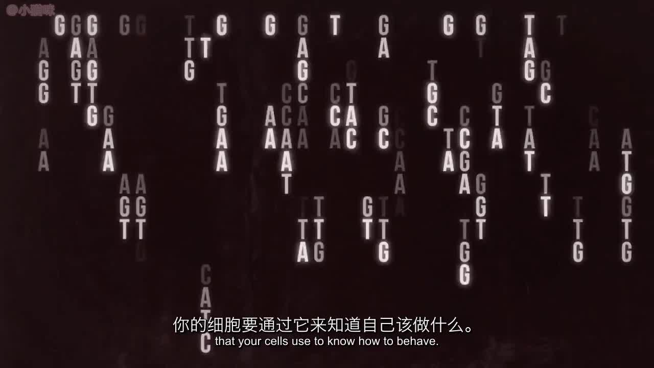 """身体如何对人类基因组进行测序-科学的""""硬核力量""""第22集"""