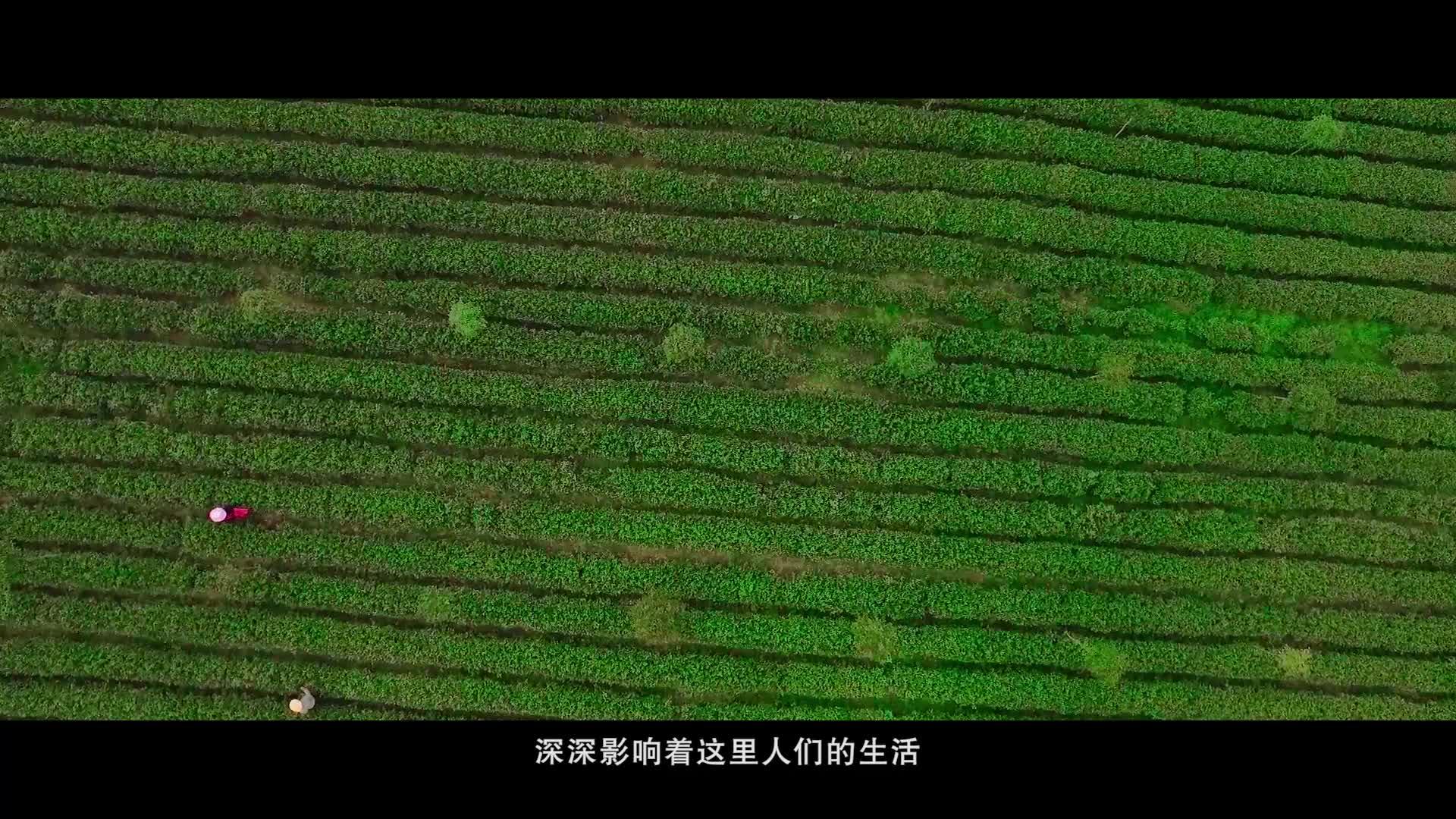汉滨生态富硒茶