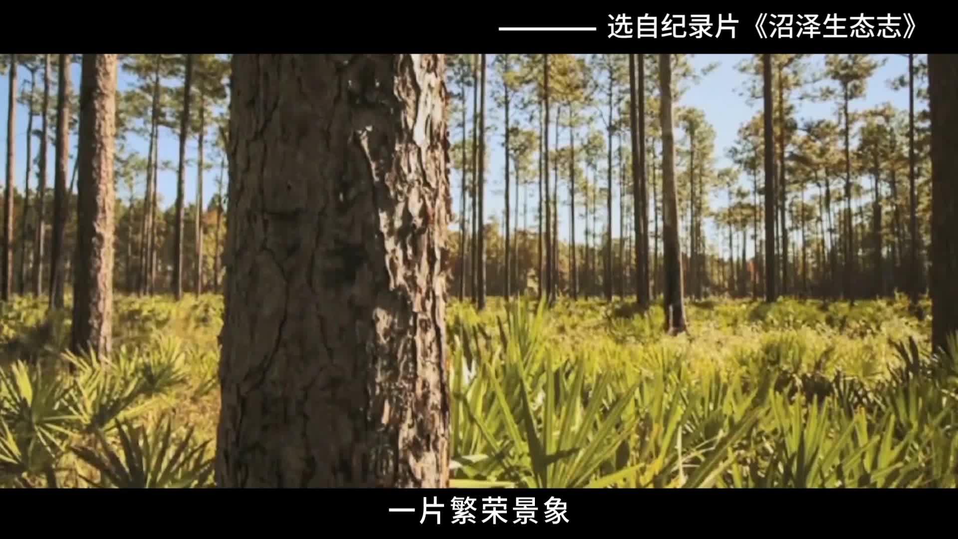 《科学嘻游记》 第60集 什么是湿地栖息地